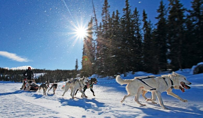 Dog Sleigh challenges acorss the snow landscapes of Norway in winter, dogs, adventure sports