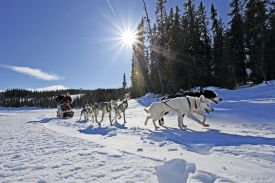 Jotunheimen National Park husky-sledding in Norway, dogs, snow, sunshine,