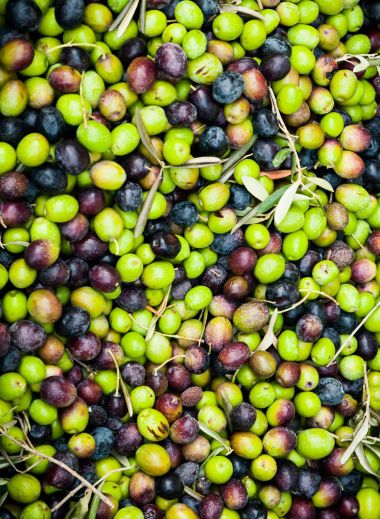 Cart of freshly picked olives on Mallorca - tour guide with Mimo Mallorca/Majorca