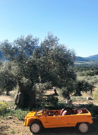 Wine + Olive tours by Mimo Mallorca - bright orange jeep parked under an olive tree