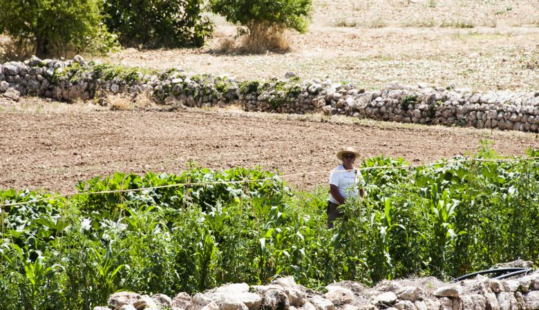 organic farm, son brull, mallorca, sun, natural, healthy, produce, fields, farmer