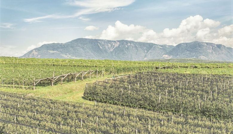The vineyards of Das Wanda boutique hotel, in Caldaro/Kaltern, South Tyrol